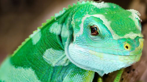What To Expect at a Reptile Convention