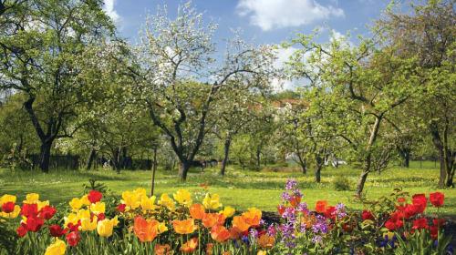 Spring of Corona
