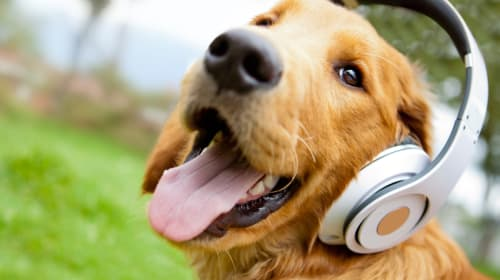 9 Great Podcasts That Have Nothing to Do with the News