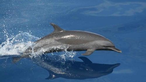 Men break lockdown rules in Spain to rescue six dolphins