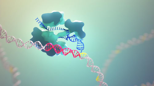 CRISPR-Cas9; The Powerful Gene Editor