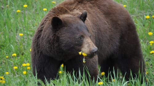 You Can Eat Weeds. Well Dandelions Anyway