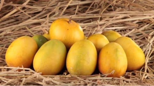 Tips on How to Choose the Perfect Mango