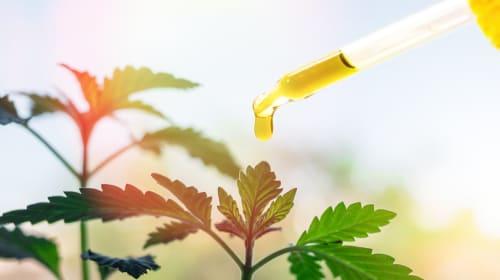 Marijuana as a Medicine – Benefits, Hazards, and State Laws