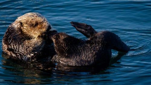 When Vancouver Aquarium Struggles, PETA Exploits