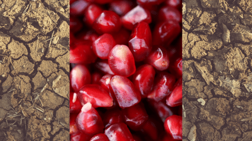 Pomegranate Seeds And Hardened Dirt