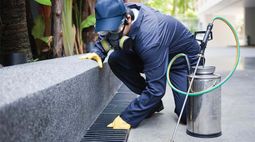 Signs of a good pest control company