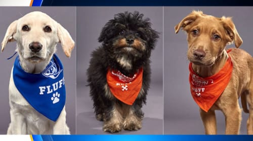 Miami-Dade County Animal Shelter