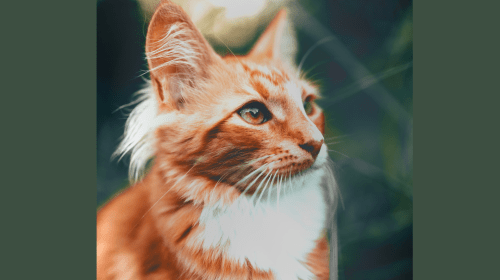 4 Cute and Chaotic Cats from Mythologies Around the World