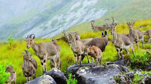Top 4 Wildlife Sanctuaries in Kerala