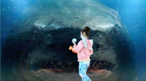 """My Review of """"The Meg"""""""