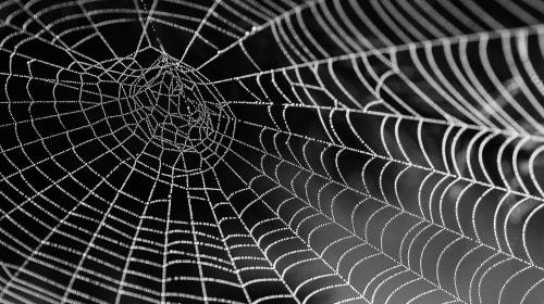 The Adventure into the Web