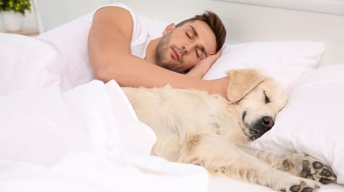Does Your Dog Sleep In Your Bed With You?