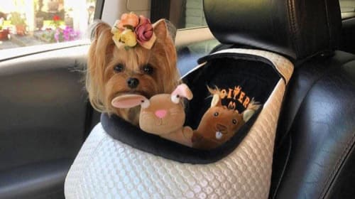Dog car seats – yes or no?