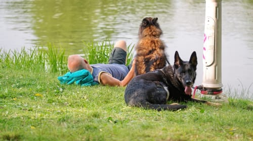 Popular products you can use for your dog!