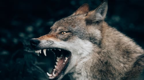 The werewolf hunter in the mansion over the hill - Part 1