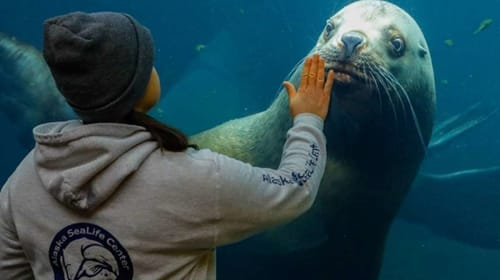 Alaska SeaLife Center On the Brink of Closing Down