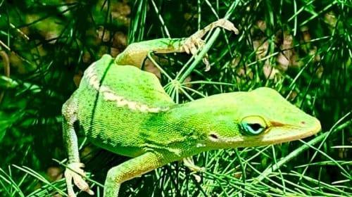 Green Garden Friend