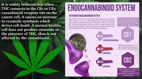 Cannabinoids and the treatment of cancer