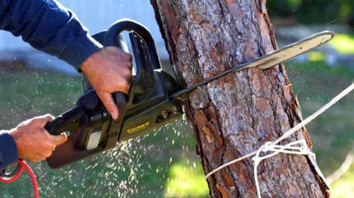 Facts About Tree Removal in Sydney