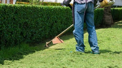 How to Protect Your Lawn from Weeds and Pests in Muskegon