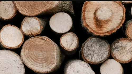 The Top Three Best Wood For Smoking Salmon