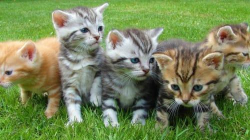 Naming Cats