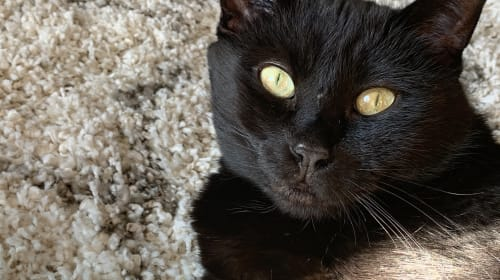 The Black Cat Who Followed Me Home