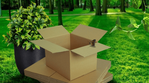 A Must-Read Guide to Save The World with Eco-Friendly Boxes!
