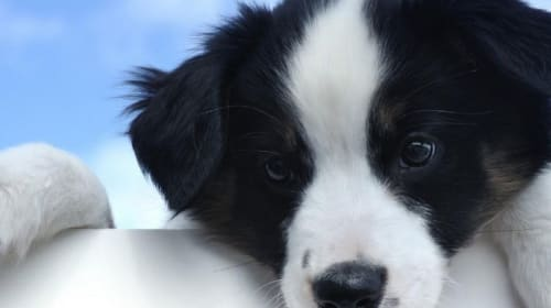 Should You Get Insurance for Your New Puppy?