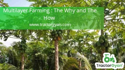 Multi-layer farming : The Why and the how.