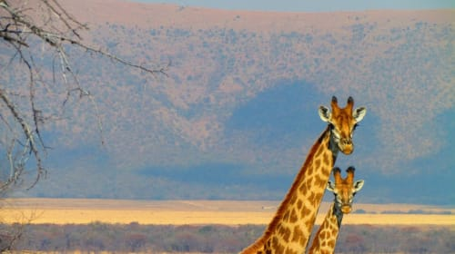 How to plan your trip to Africa in few easy steps