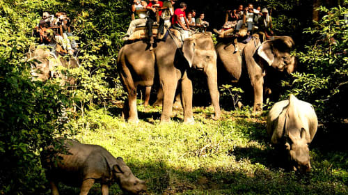 Things To Do In Chitwan National Park 2021