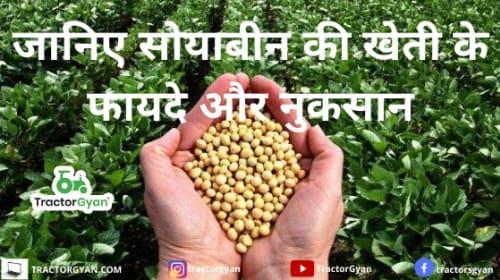 Soyabean Cultivation