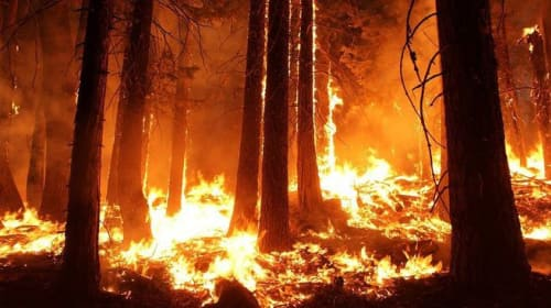 Wildfires in 2020 could be worse than a year ago, WWF warns