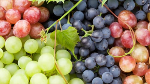 13 Reasons You Should Eat Grapes
