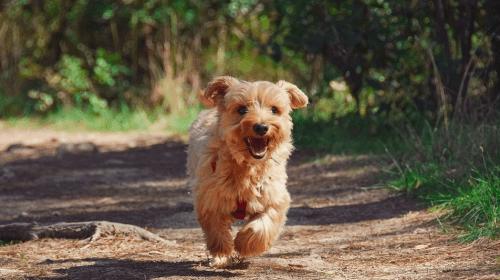 Dog Walking: