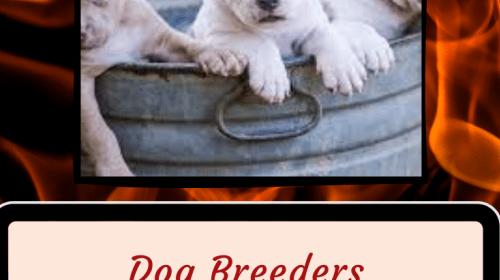 Being A Reputable Dog Breeder