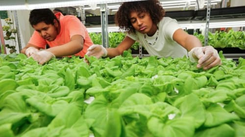 How Urban farms in Schools are Raising food to Fight Inequality