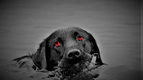 The Monster of Black Lake