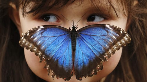 A Country Like No Other. . Costa Rica / The Blue Morpho Butterfly