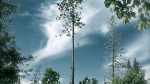 The Bluebird Carries the Sky