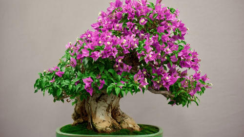 These 5 Things You Should Need to Know About Bonsai Tree