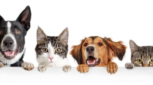 How you can make a strong bond with your pet?