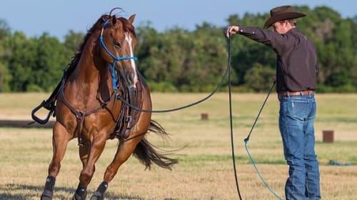 How to Break a Horse