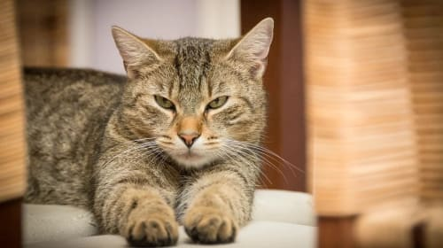 Should you cut your cat's nails? 3 steps to safely trim your cat's nails