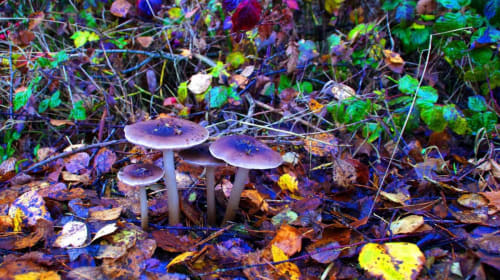Why I Microdose Mushrooms for Depression and ADHD