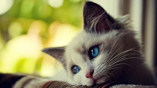 Prevention of 4 dangerous diseases for cats