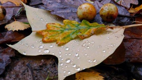 Autumn Sparks