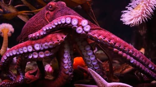 Five Life Lessons From The Mighty Octopus